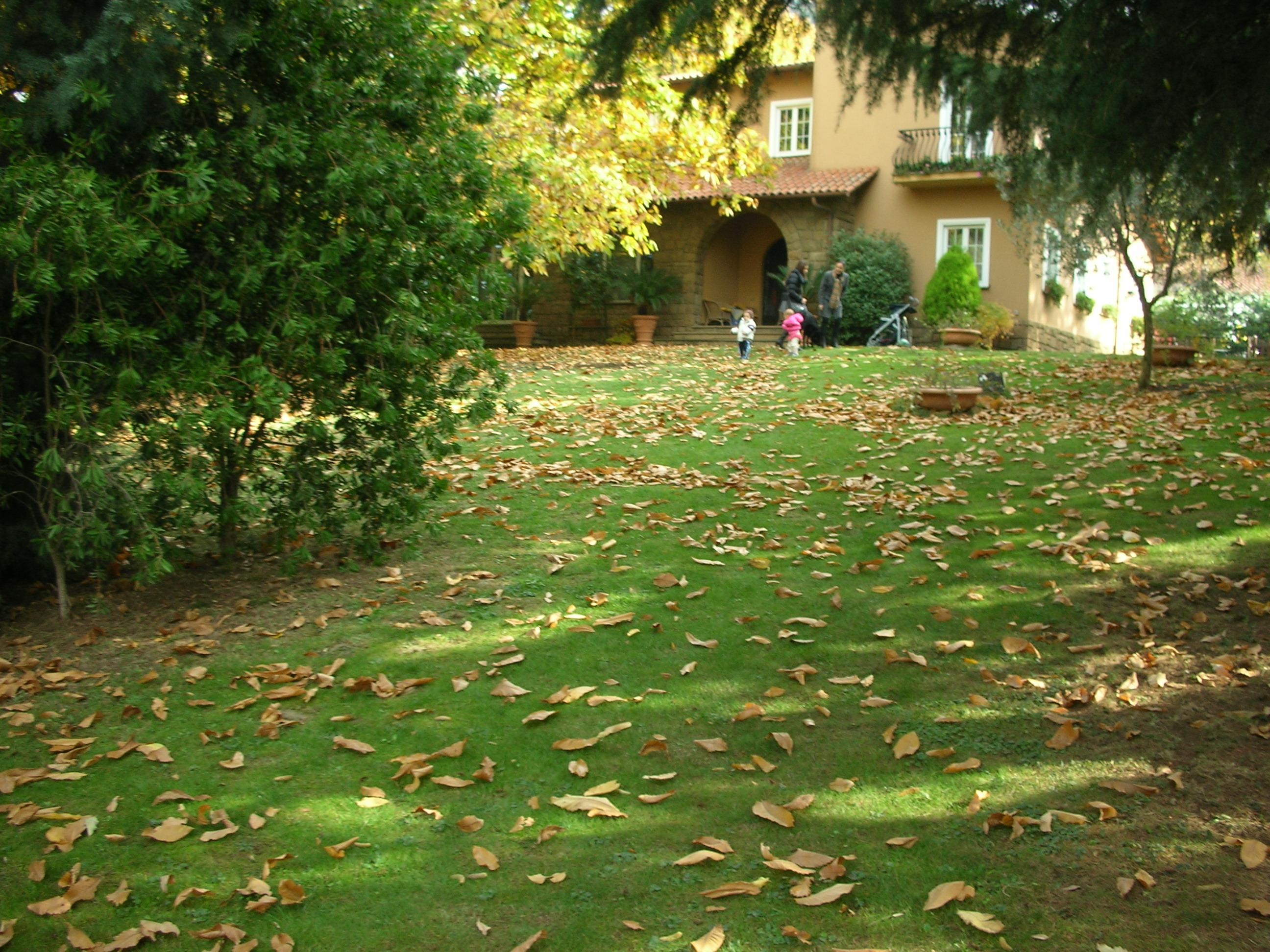 Affittasi location castelli romani villa allombra del - Giardino in ombra ...