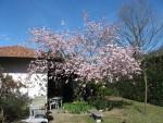 Villa Besano